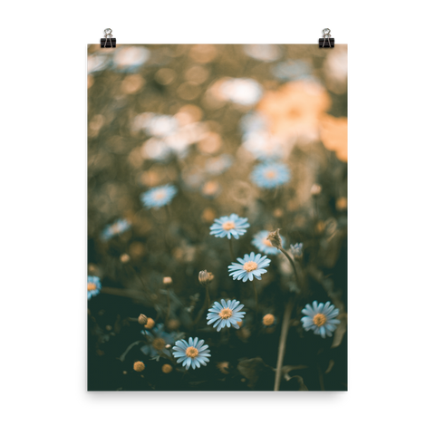 Field Of Flowers / Poster Print