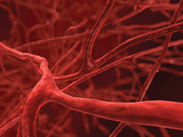 Are New Blood Vessels A Good Thing?