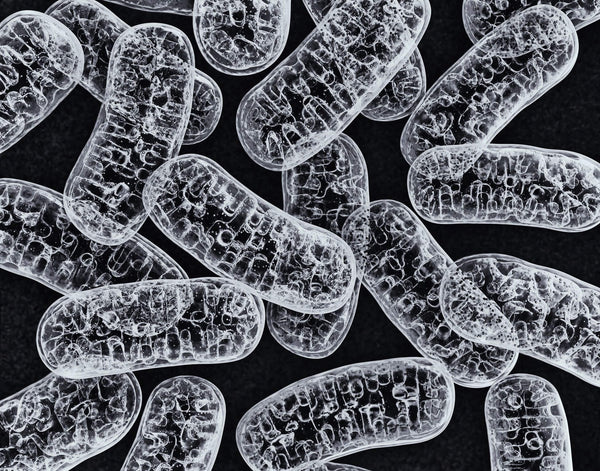 Mitochondrial Health and Our Bodies