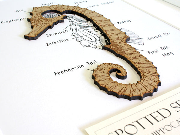 Seahorse nautical decor