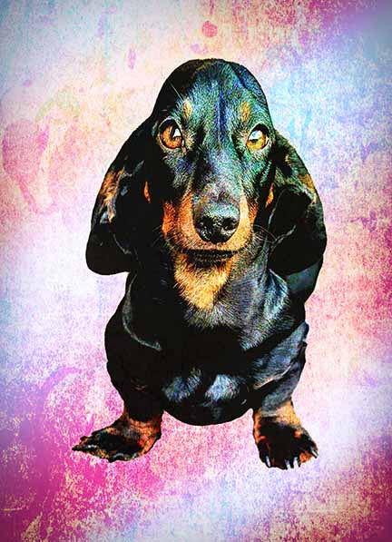 The Doxie 500 Piece Jigsaw Puzzle