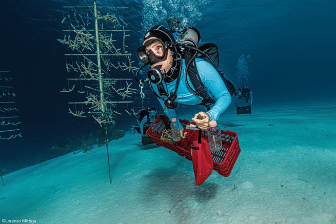 Francesca Virdis Earns  May 2020 Sea Hero Honors for Coral Restoration work in Bonaire