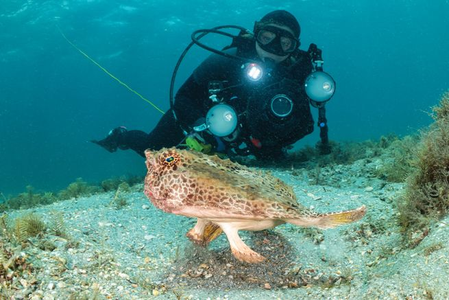 Author and Underwater Photographer Suzan Meldonian Named  April 2020 Sea Hero.