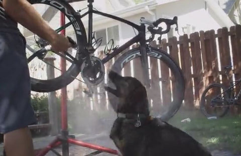Luna loves bike washing day #Rideitslick