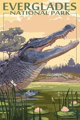 Everglades National Park Postcard, Florida, alligator parent and baby view