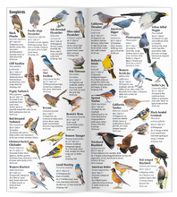 Load image into Gallery viewer, Birds of Central & Northern California: A Guide to Common & Notable Species
