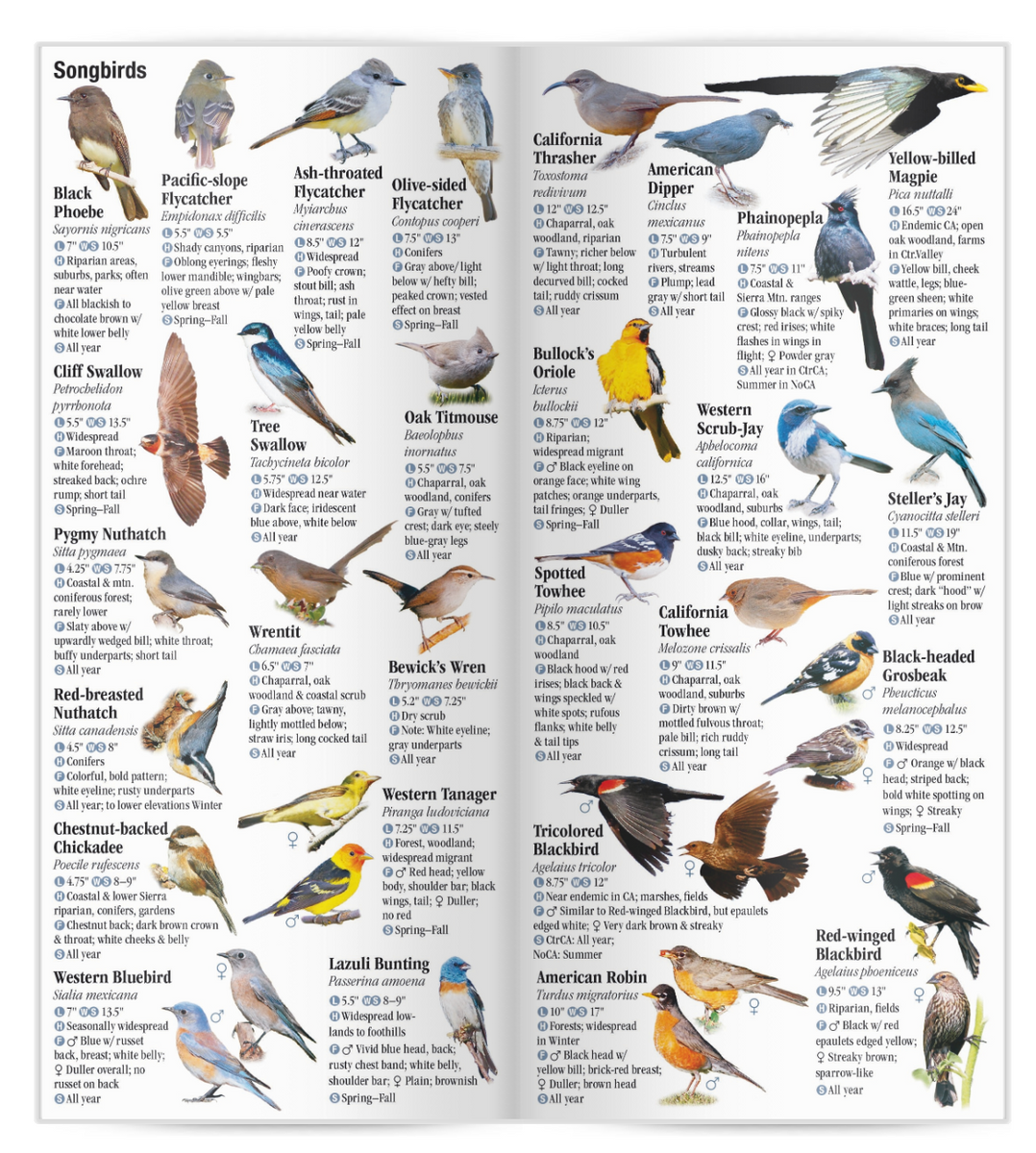 Birds Of Central & Northern California: A Guide To Common
