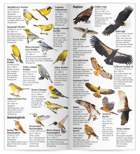 Birds of Utah: A Guide to Common & Notable Species