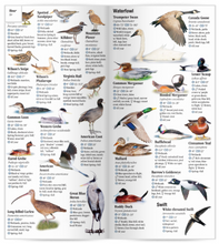 Load image into Gallery viewer, Birds of Yellowstone & Grand Teton National Parks: A Guide to Common & Notable Species