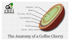 The Anatomy of a Coffee Cherry