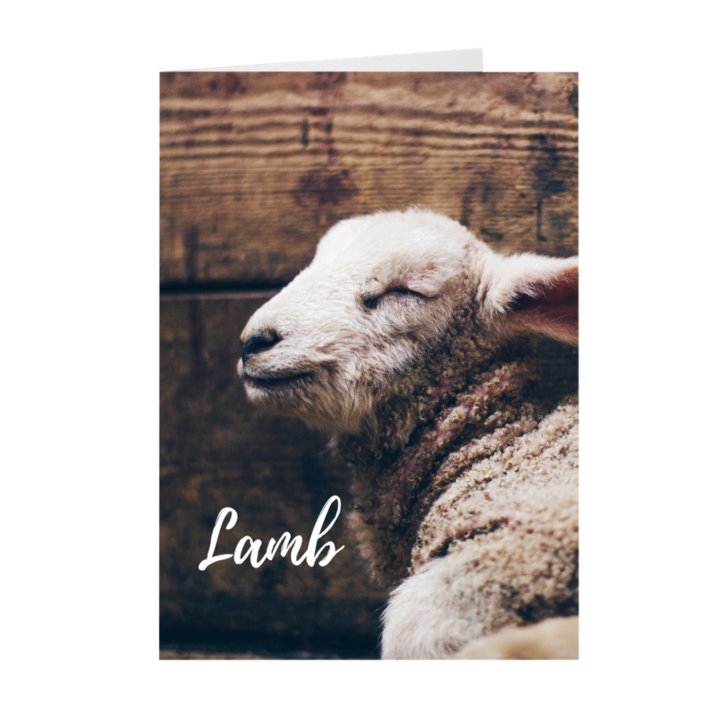 Lamb, Lion, King - Easter Card