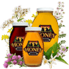 Raw Honey Varietals