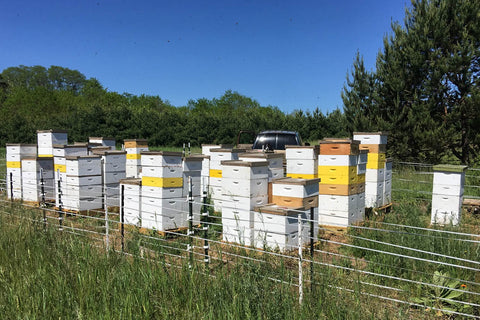Beehives in woodlands