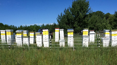 Beehives in woodland meadows