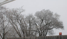 That was our weather today, freezing fog.  Everything was gray and still and the fog froze and clung to the branches of the trees in back of the house.  I didn't have to go anywhere today (when do I ever these days?) but the street looked wet and...