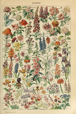 Assorted Flowers - Vintage Bookplate
