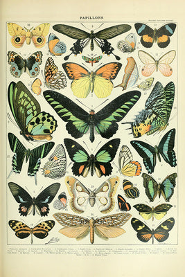 Butterflies - Vintage Bookplate