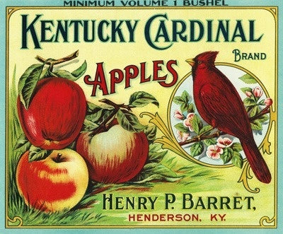 Kentucky Cardinal Brand Apple - Vintage Label
