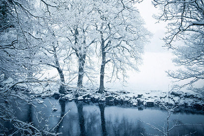 Snowy Trees and Lake Photography