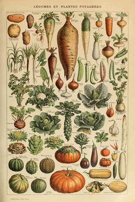 Vegetables - Vintage Bookplate