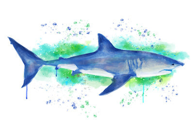 Watercolor Great White Shark