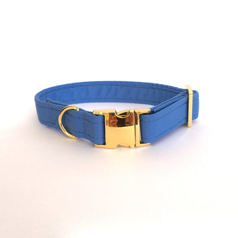 blue collar with gold buckle