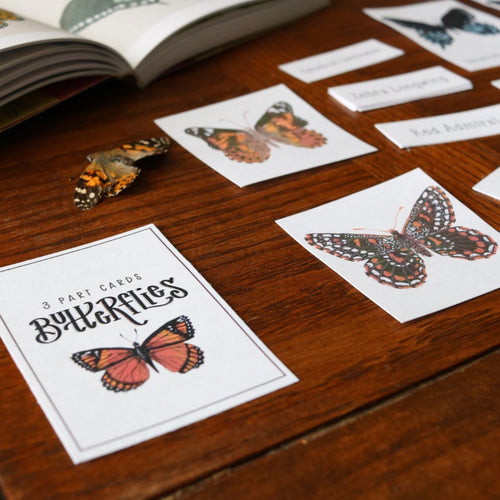 Butterflies- Mini Cards
