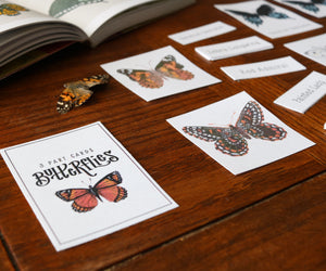 Butterflies- Full Nature Guide