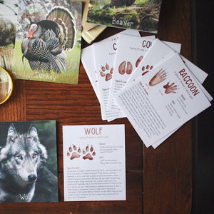 Animal Tracks- Fact Cards