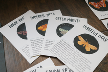 Load image into Gallery viewer, Moths- Fact Cards