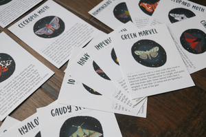 Moths- Fact Cards