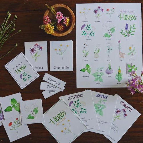 Medicinal Plants and Herbs- Full Nature Guide