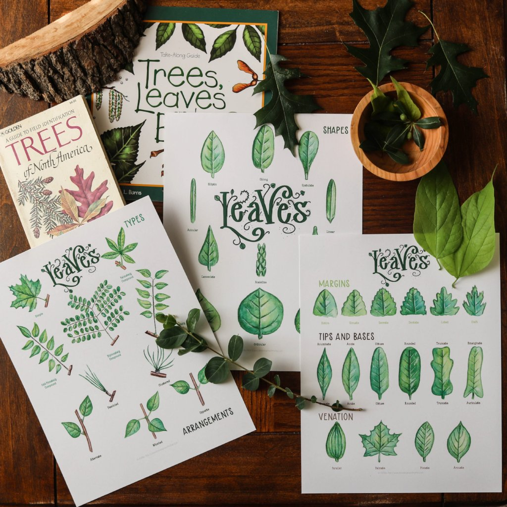 Leaves- Art Posters