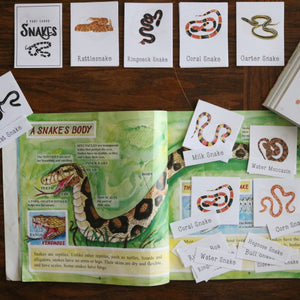 Snakes- Mini Cards