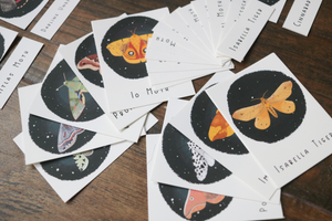 Moths- Mini Cards