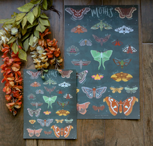 Load image into Gallery viewer, Moths- Art Posters