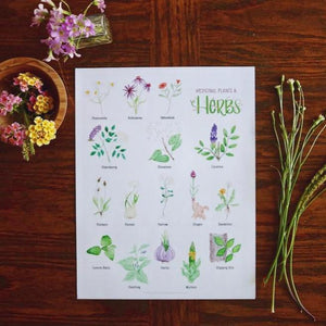Medicinal Plants and Herbs- Art Posters