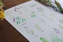Load image into Gallery viewer, Medicinal Plants and Herbs- Art Posters
