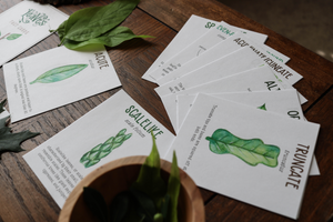 Leaves- Fact Cards