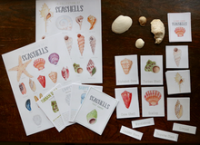 Load image into Gallery viewer, Seashells- Full Nature Guide