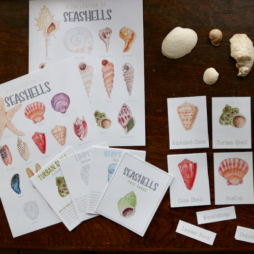 Seashells- Full Nature Guide