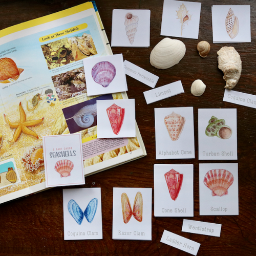 Seashells- Mini Cards