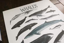 Load image into Gallery viewer, Whales- Art Posters