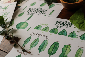Leaves- Full Nature Guide