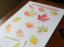 Load image into Gallery viewer, Throw Back: Autumn Leaves Full Nature Guide