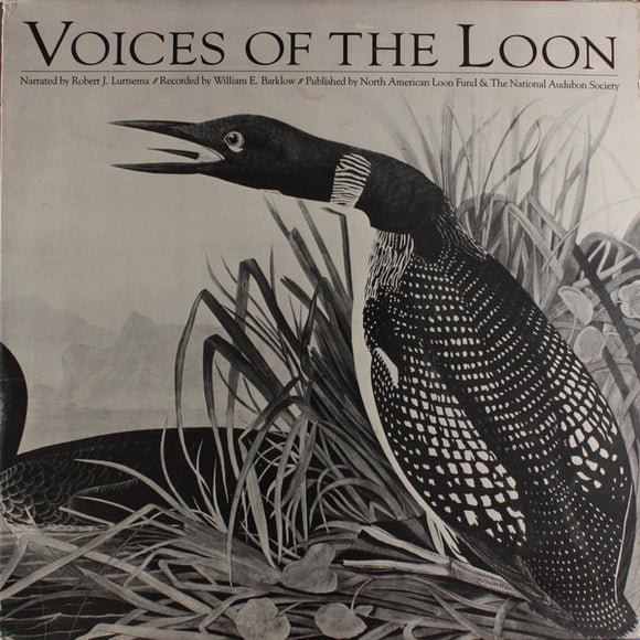 Great Northern Loon - Voices Of The Loon