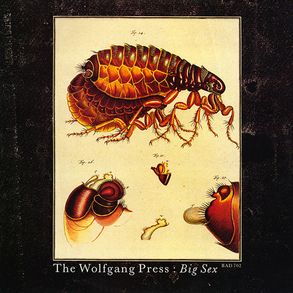 The Wolfgang Press - Big Sex