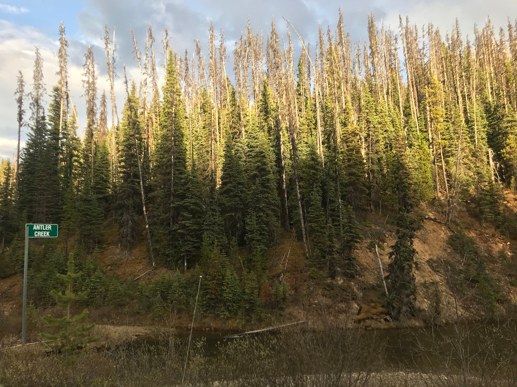 Antler Creek BC Gold Claim For Sale