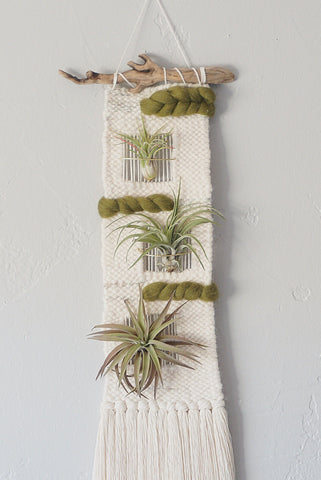 Narrow Weaving with Air Plants