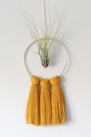 Gold Ring Air Plant Display